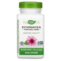 Эхинацея (Echinacea) натуральное иммуностимулирующее растение