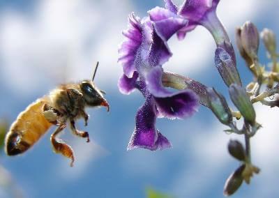 Бальзам для губ на основе пчелиного воска
